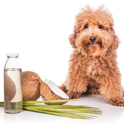 9 Natural Health Alternatives for Your Dog