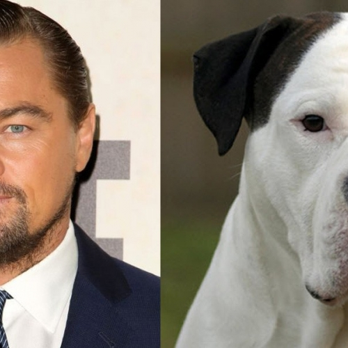 If Your Favorite Male Celebrities Were Dogs
